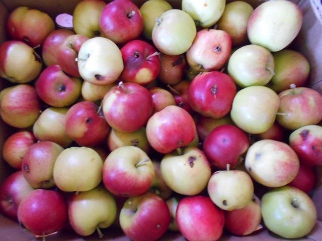 frozen-apple-pie-1